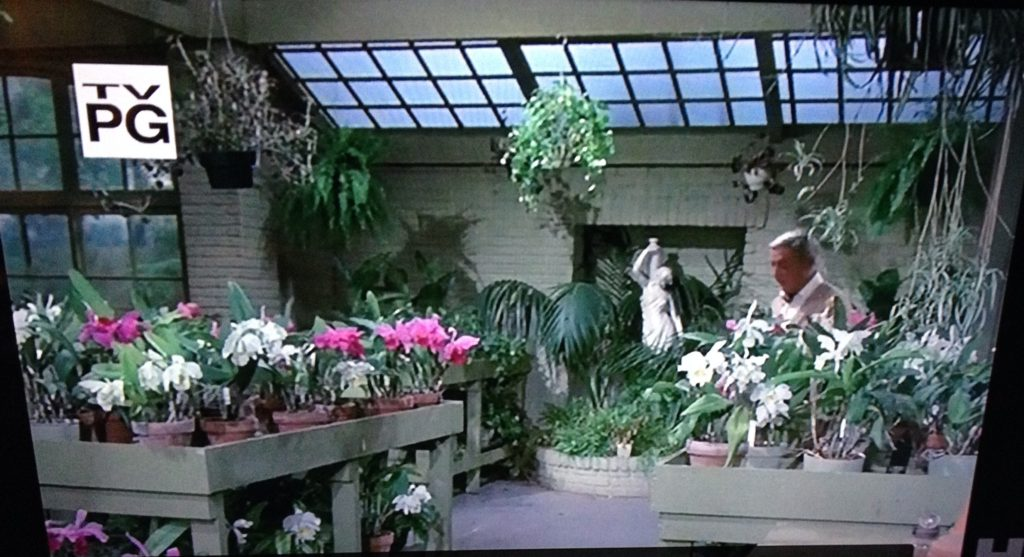 Hollywood Houseplants