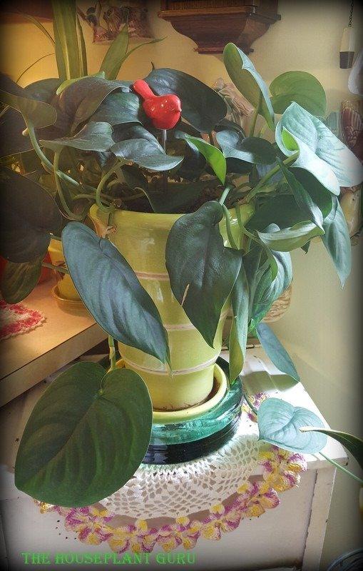 houseplants 042