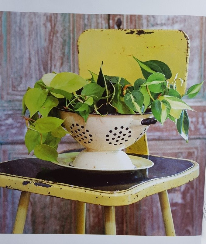 Colander with Philodendron