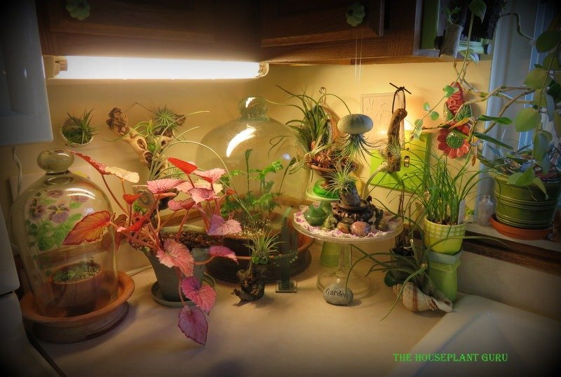 """Corner of the counter covered with plants and """"stuff""""."""