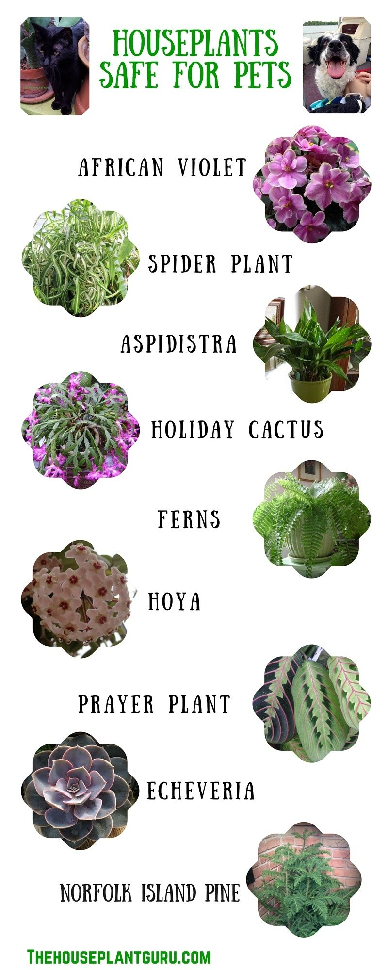 Pet Friendly Houseplants 3